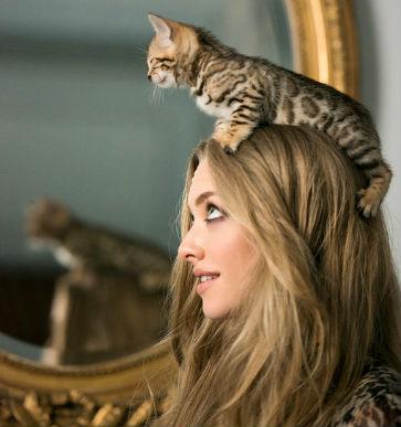 amanda-seyfried-cat