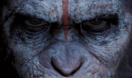 amanecer-simios-mirada