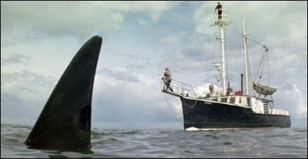 Foto de la orca acechando