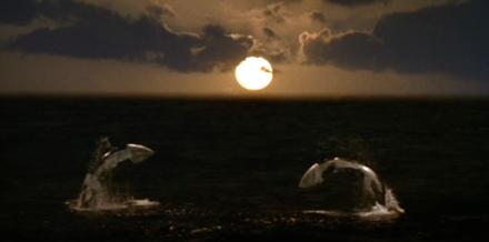 Foto de las orcas en el mar