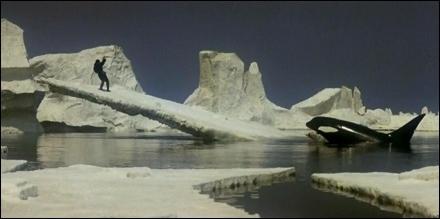 Foto de la Orca en el glacial
