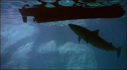 tiburon_balsa