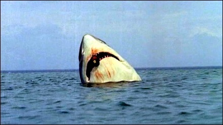 tiburon_cabeza