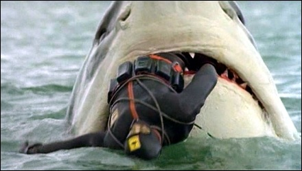 tiburon_devora