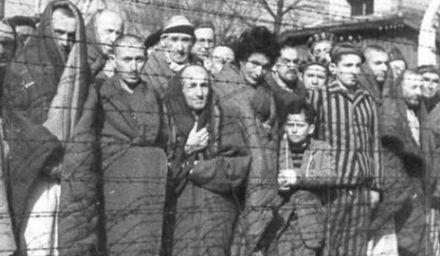 auschwitz-presos