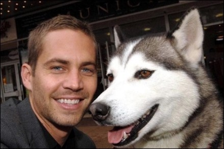 paul-walker-husky