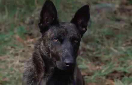 aullidos-the-breed-perro
