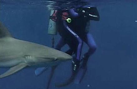 open-water-tiburon
