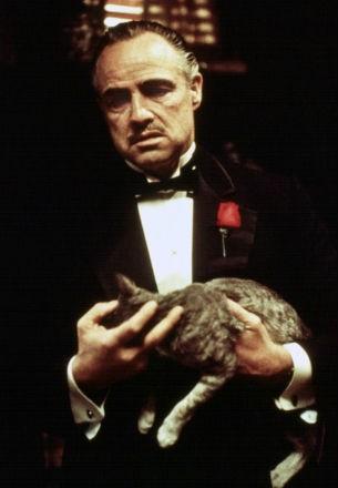 el-padrino-gato